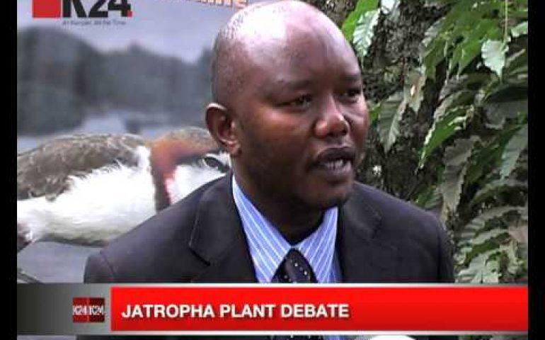 Jatropha plant debate