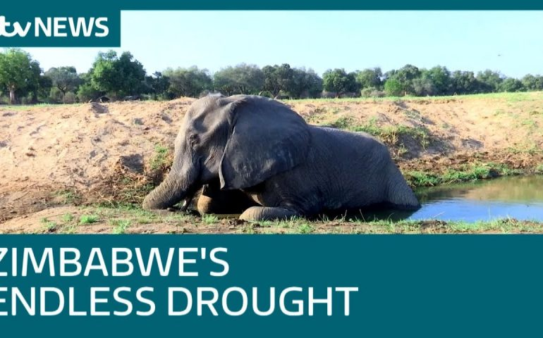 Zimbabwe's National Parks are 'graveyards' due to drought | ITV News